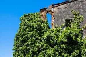 hiedra en la pared y cielo azul foto
