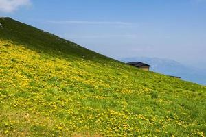 Green meadows and yellow dandelion flowers between the Alps in Recoaro Mille photo