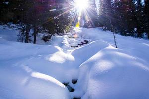 los rayos del sol penetran en los pinos de hoja perenne foto