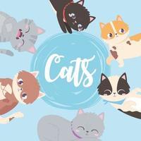 cats cute feline mascot animals domestic blue background vector