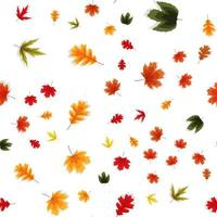 Autumn Falling Leaves Seamless Pattern Background vector