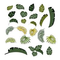 Palm leaf Tropical leaves with isolated white background vector