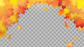 Falling autumn maple leaves on transparent background vector