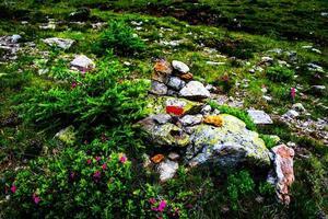 Signo de sendero rojo y blanco del camino sobre una roca foto
