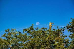 luna en el cielo azul foto