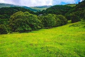 Green meadow on Monte Altissimo di Nago in Trento, Italy, in summer photo