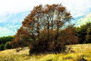 Trees in autumn photo