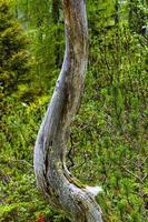 tronco de árbol muerto foto