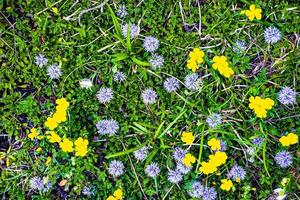 flores en la hierba foto