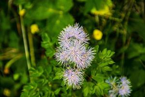 Wild flowers in the nature photo