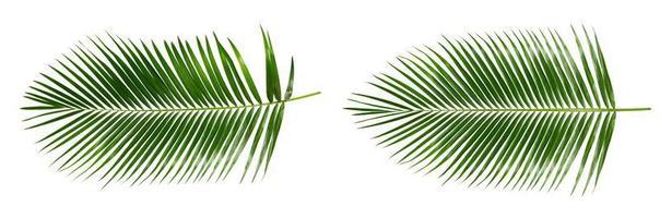 hojas de palma aisladas foto
