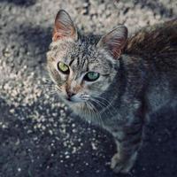 hermoso retrato de gato callejero gris foto
