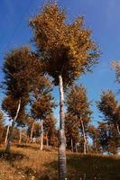 árboles en la montaña en otoño foto