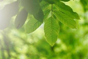 green tree leaves in springtime photo