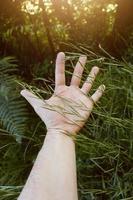 mano tocando las plantas foto