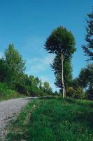 camino con árboles verdes en la montaña foto