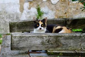 hermoso gato callejero en la calle foto