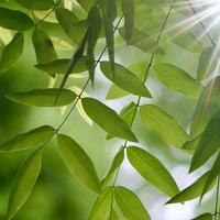 green tree leaves in the nature green background photo