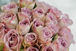 Purple roses bouquet close up photo