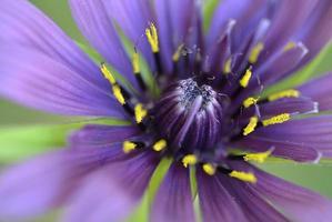Close-up purple flower and pistil photo