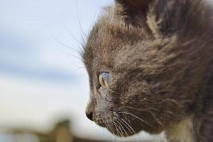 retrato de gato pensativo foto