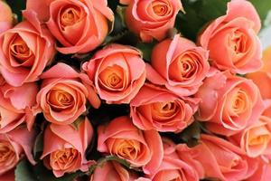 Coral rose bouquet flowers photo