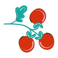 Branch of red tomato vector isolated flat illustration