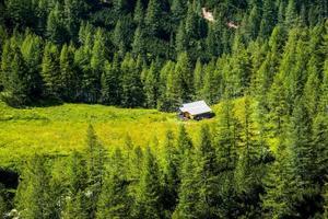 bosque en los dolomitas foto