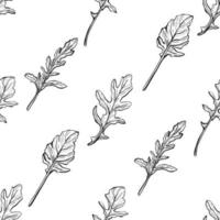 arugula seamless pattern. Vector illustration