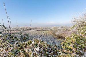 Campo de vid helado enmarcado por árboles y arbustos contra un cielo azul foto
