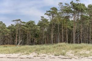 Pine forest on the German Baltic coast with dunes and sand photo