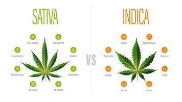 Sativa vs indica white information poster with difference of indica and sativa vector