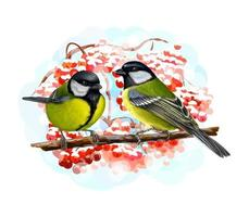 Tit birds sitting on a branch on white background hand drawn sketch Vector illustration of paints