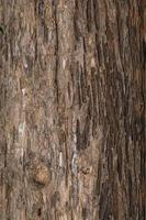 textura de madera de un árbol foto