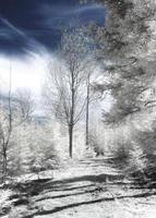 Forest in infrared with red and blue channel switch photo