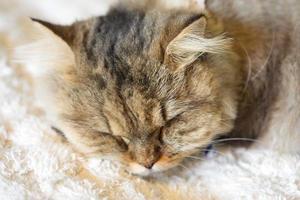 Cute sleeping cat photo
