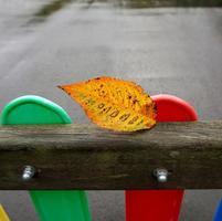 hoja de árbol amarilla en temporada de otoño foto