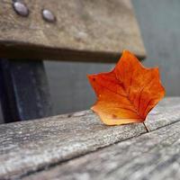 hoja de árbol marrón en la temporada de otoño foto