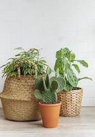 plantas de interior en la mesa foto