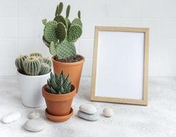 Cactuses and succulent plant in  pots on the table photo