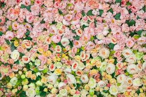 Soft color roses background photo