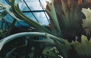 jardín botánico de porto foto