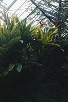 Botanic garden Porto photo