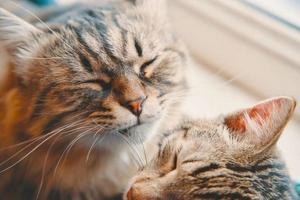 Two cats sleep in basket on window background photo