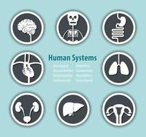 Human Systems Icon   Neurological  Musculoskeleton  Gastrointestinal  Cardiovascular  Respiratory  Genitourinary  Hepatobiliary  Gynecological vector
