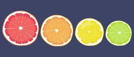 Round lobules of citrus fruits vector