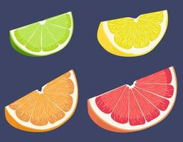 Slices of citrus fruits vector