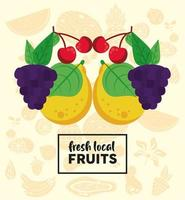 fresh local fruits lettering with grapes and fruits vector