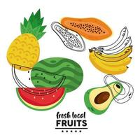 fresh local fruits lettering with watermelon and fruits vector