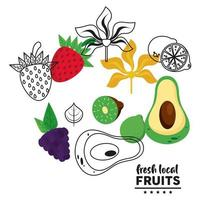 fresh local fruits lettering with set fruits in white background vector